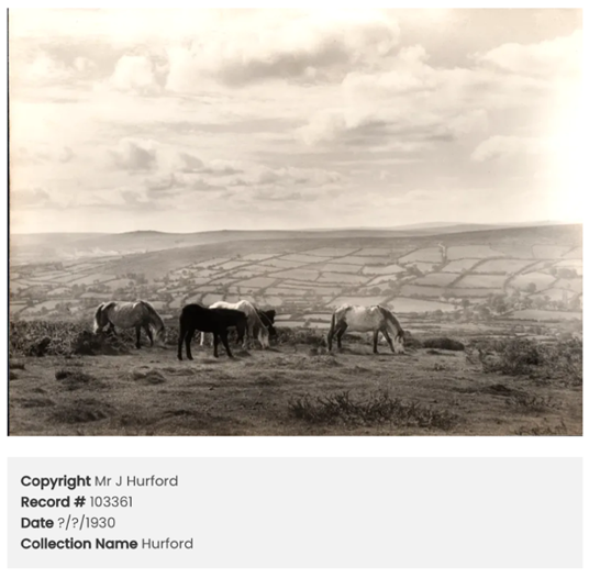 An archive landscape photograph of Dartmoor with enclosed fields in the background